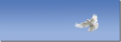 Dove graphic found via Google