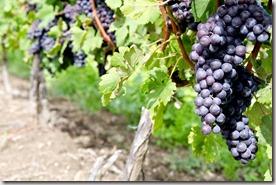 Vineyard photo found via Google