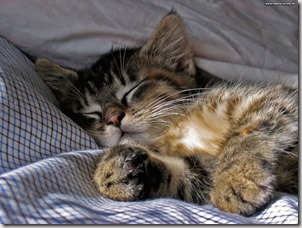Sleeping cat photo found via Google
